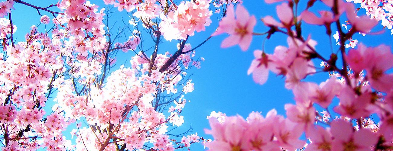 一年之计在于「春」, 历代书法名家写「春」字